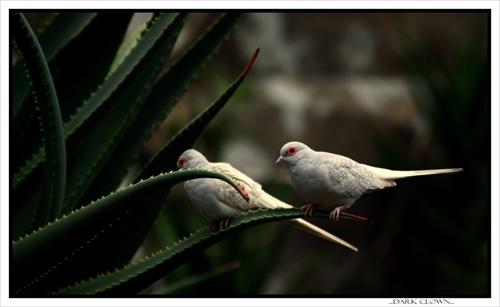 ....two white birds...