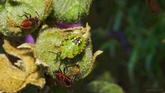 zo života hmyzu 3