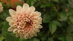 zo záhradky 3
