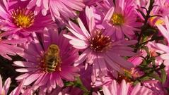 ružová paleta 2