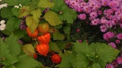 jesenná paleta 2