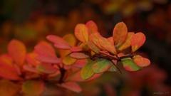 jesenný sen...