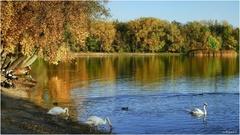 jeseň a voda II