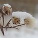 zimné obrázky II