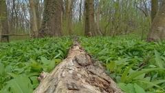 v lužnom lese...