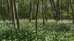rozprávkový les II