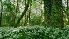 v lesných zákutiach...