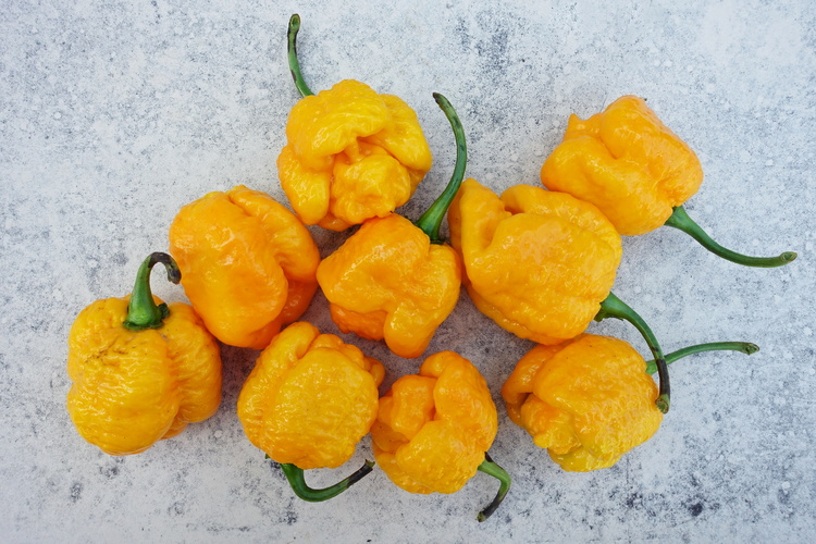trinidad moruga scorpion yellow II