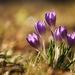 ....Malý pozdrav jari