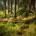 lesní potěšení