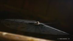 pavúčik II