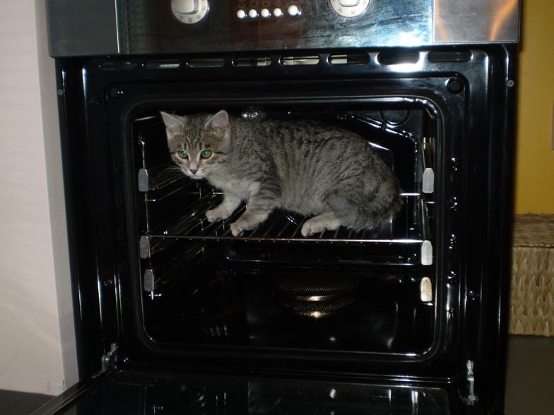 Kocúr v trúbe vs mačka vo vreci. NYi_173511_orig