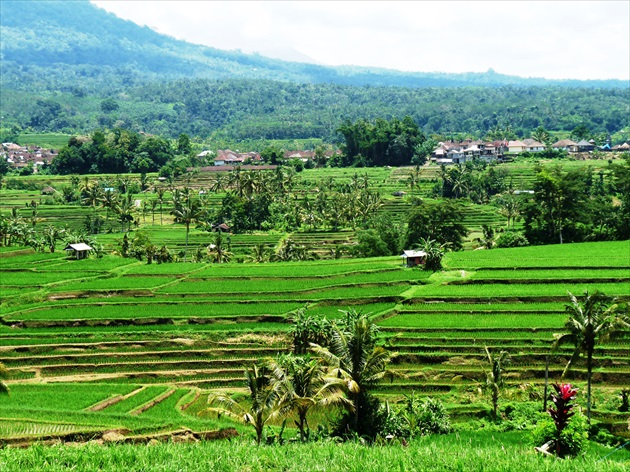 Bali, Rice terraces (Unesco)