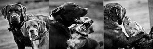 one story - two dogs - three moments