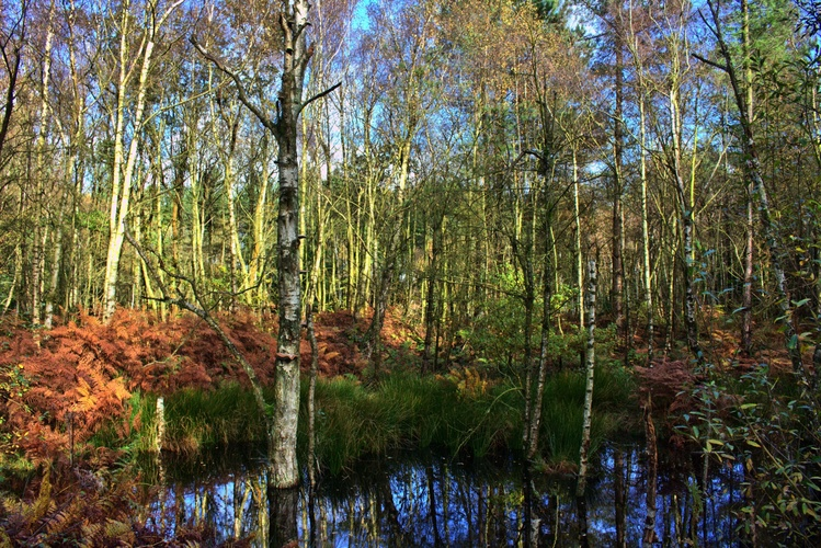 Delamere forest II