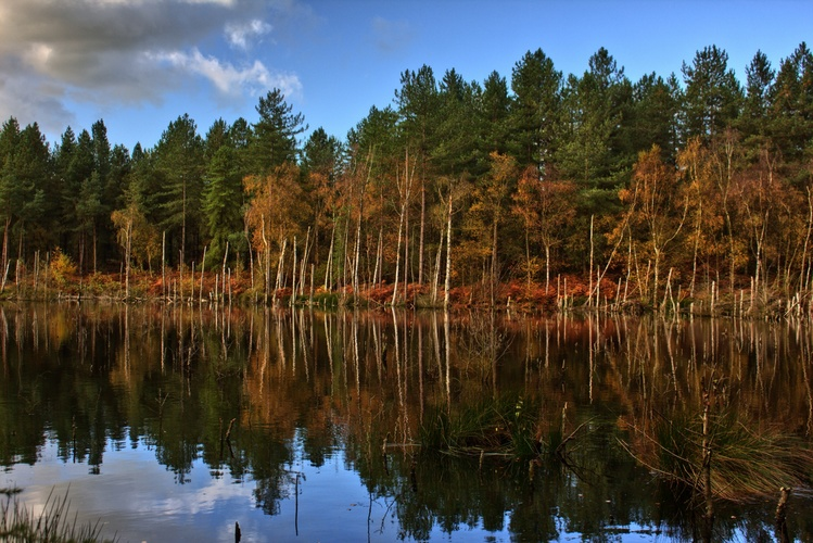 Delamere forest III