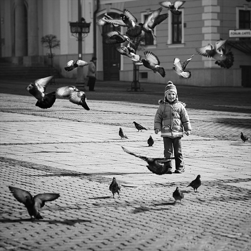 Lord of the Pigeons